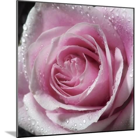 Raindrops & Roses III-Monika Burkhart-Mounted Photo
