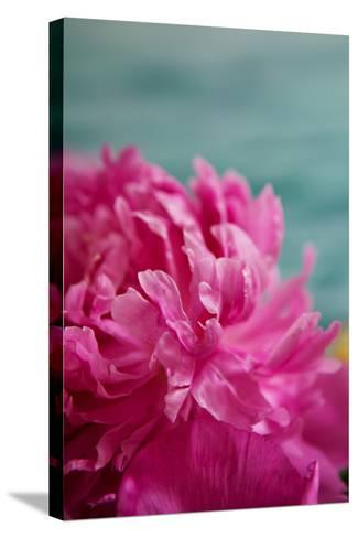 Fuchsia Peonies III-Karyn Millet-Stretched Canvas Print