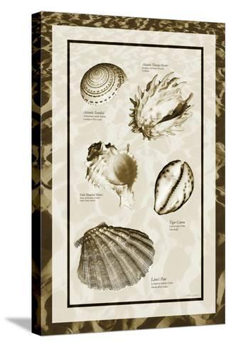 Sand & Shells II-Alan Hausenflock-Stretched Canvas Print