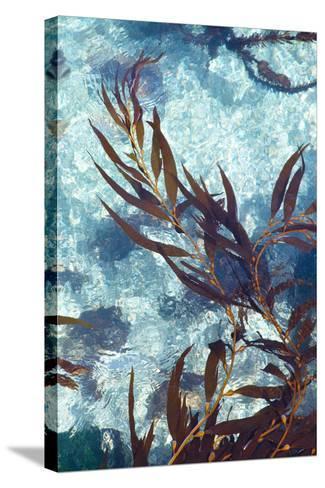 Mermaid Tresses III-Rita Crane-Stretched Canvas Print