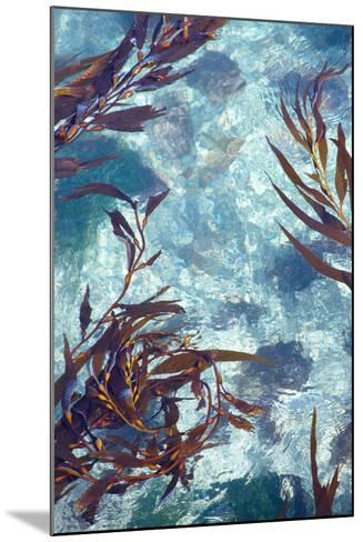 Mermaid Tresses IV-Rita Crane-Mounted Photo