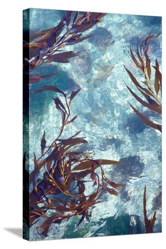 Mermaid Tresses IV-Rita Crane-Stretched Canvas Print