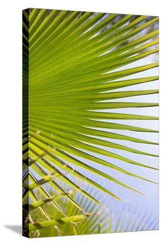 Palm Branch-Karyn Millet-Stretched Canvas Print