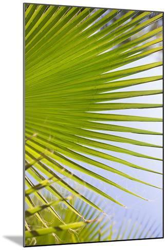 Palm Branch-Karyn Millet-Mounted Photo