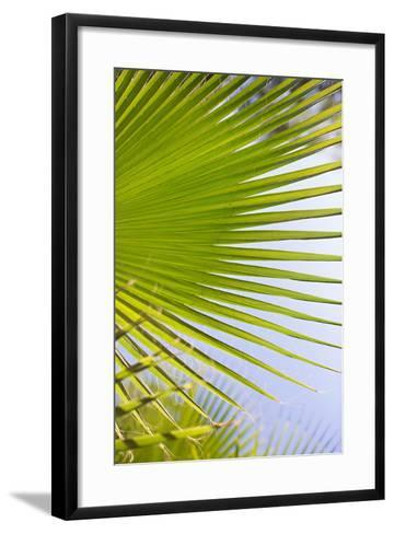 Palm Branch-Karyn Millet-Framed Art Print
