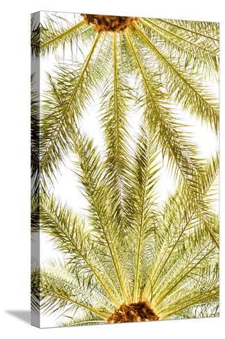 Below the Palms VI-Karyn Millet-Stretched Canvas Print
