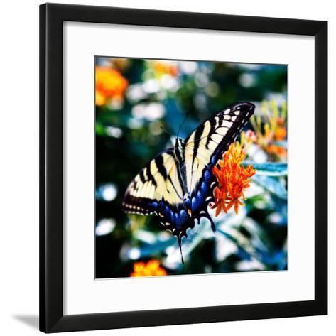 Resting Butterfly II-Alan Hausenflock-Framed Art Print