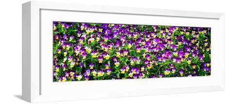 Spring Flowers I-Alan Hausenflock-Framed Art Print