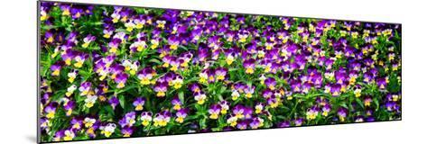 Spring Flowers I-Alan Hausenflock-Mounted Photo