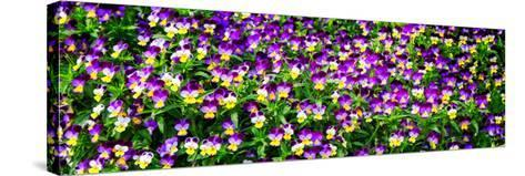 Spring Flowers I-Alan Hausenflock-Stretched Canvas Print