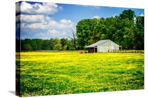 Spring Pasture I-Alan Hausenflock-Stretched Canvas Print