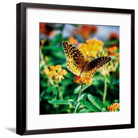 Resting Butterfly I-Alan Hausenflock-Framed Art Print