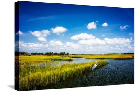 Wetland Herons II-Alan Hausenflock-Stretched Canvas Print