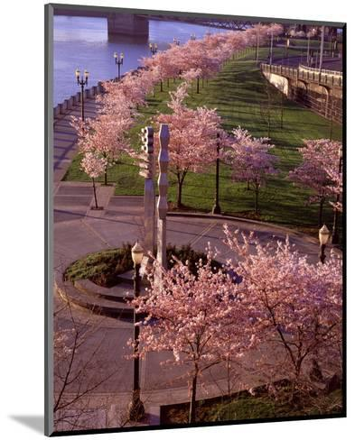 Spring in Portland-Ike Leahy-Mounted Photo