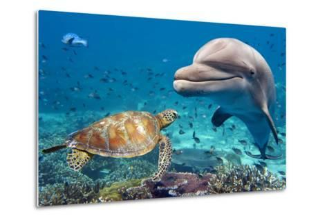 Dolphin and Turtle Underwater on Reef Background Looking at You-Andrea Izzotti-Metal Print
