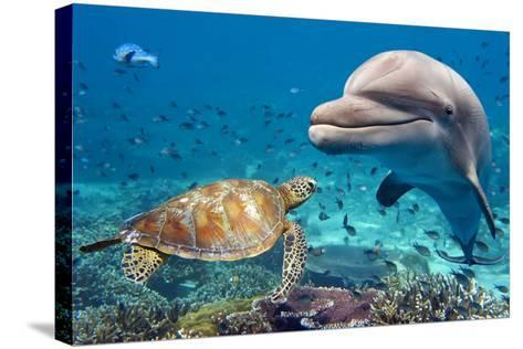 Dolphin and Turtle Underwater on Reef Background Looking at You-Andrea Izzotti-Stretched Canvas Print