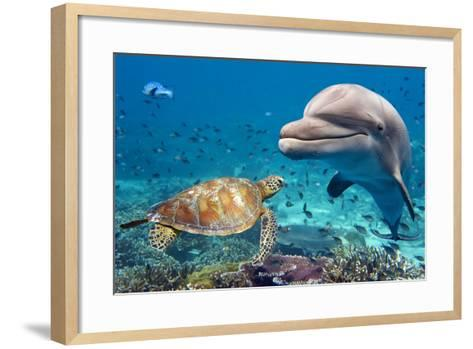 Dolphin and Turtle Underwater on Reef Background Looking at You-Andrea Izzotti-Framed Art Print