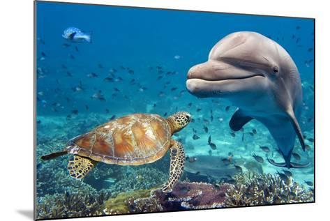 Dolphin and Turtle Underwater on Reef Background Looking at You-Andrea Izzotti-Mounted Photographic Print