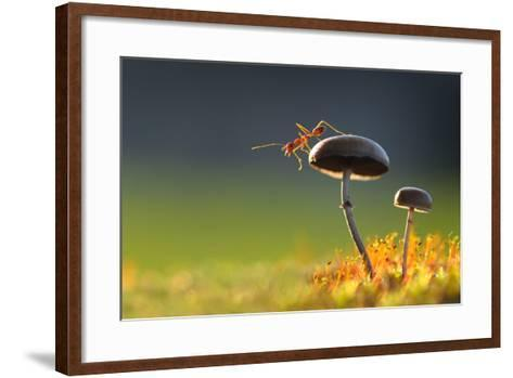 Weaver Ant Want to Jump from a Mushroom with Green Background-Robby Fakhriannur-Framed Art Print