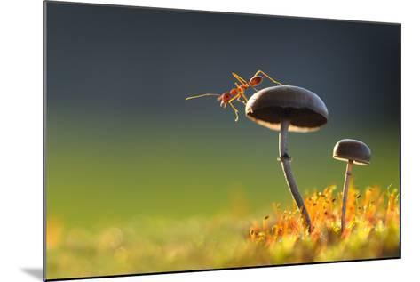 Weaver Ant Want to Jump from a Mushroom with Green Background-Robby Fakhriannur-Mounted Photographic Print