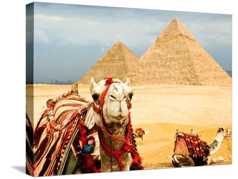 Camel in Egypt- nutsiam-Stretched Canvas Print