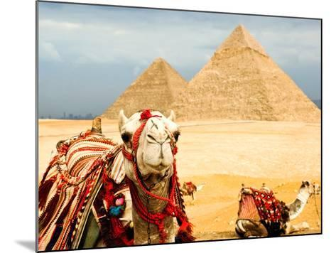 Camel in Egypt- nutsiam-Mounted Photographic Print
