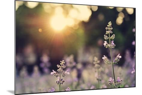 A Field of Lavender Flowers during Sunset in New York City-Jiyang Chen-Mounted Photographic Print