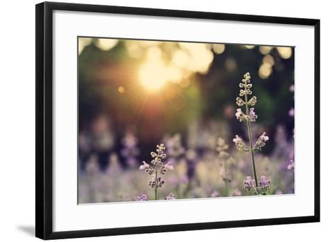 A Field of Lavender Flowers during Sunset in New York City-Jiyang Chen-Framed Art Print
