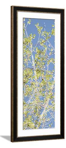 Spring Poplars II-Sharon Chandler-Framed Art Print
