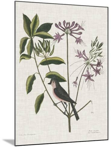 Studies in Nature I-Mark Catesby-Mounted Art Print