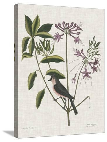 Studies in Nature I-Mark Catesby-Stretched Canvas Print