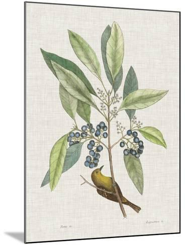 Studies in Nature IV-Mark Catesby-Mounted Art Print