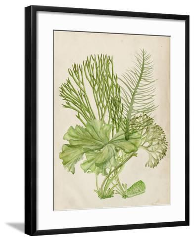 Vintage Coral Collection I-Melissa Wang-Framed Art Print