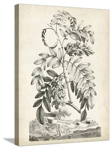 Scenic Botanical I-Abraham Munting-Stretched Canvas Print