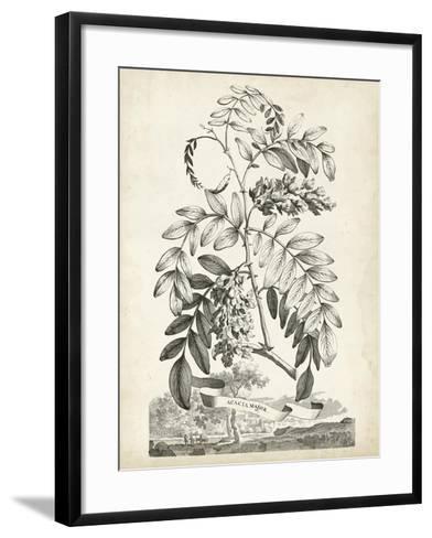 Scenic Botanical I-Abraham Munting-Framed Art Print