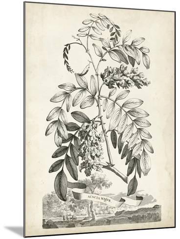 Scenic Botanical I-Abraham Munting-Mounted Art Print