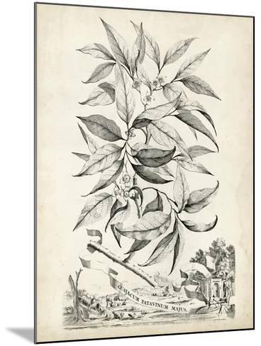 Scenic Botanical IV-Abraham Munting-Mounted Art Print