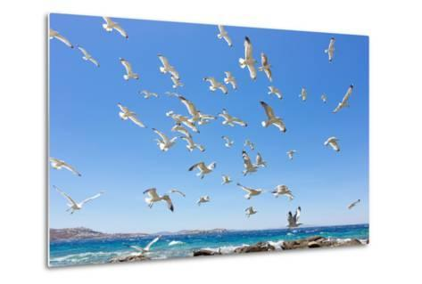 Swarm of Sea Gulls Flying close to the Beach of Mykonos Island,Greece-smoxx-Metal Print