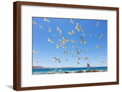 Swarm of Sea Gulls Flying close to the Beach of Mykonos Island,Greece-smoxx-Framed Art Print