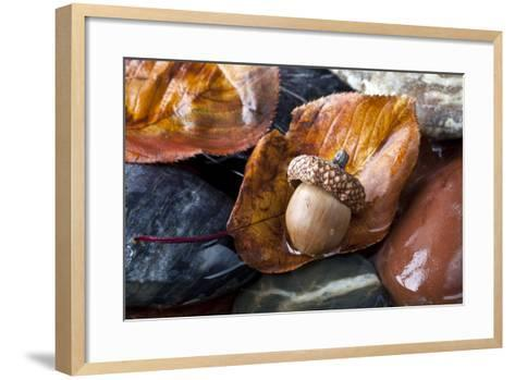 Autumn in Central Park with Acorn on Leaf after Rain-John A Anderson-Framed Art Print