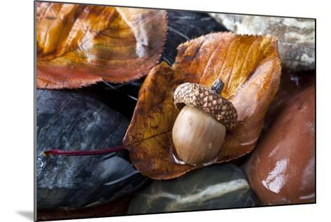 Autumn in Central Park with Acorn on Leaf after Rain-John A Anderson-Mounted Photographic Print