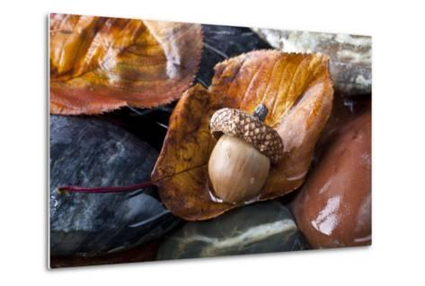 Autumn in Central Park with Acorn on Leaf after Rain-John A Anderson-Metal Print