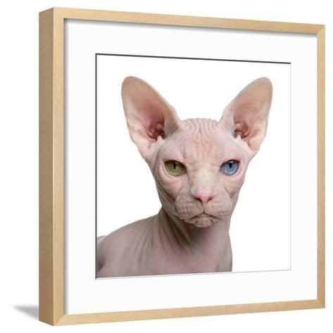 Sphynx Cat, 1 Year Old, in Front of White Background-Eric Isselee-Framed Art Print