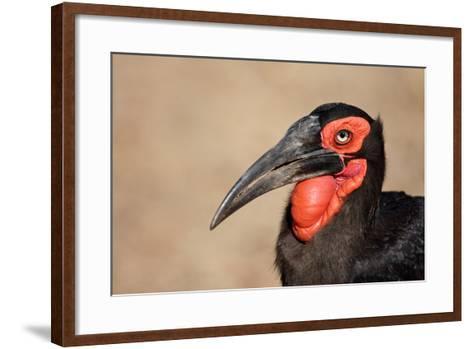 Portrait of a Southern Ground Hornbill; Bucorvus Leadbeateri; South Africa-Johan Swanepoel-Framed Art Print