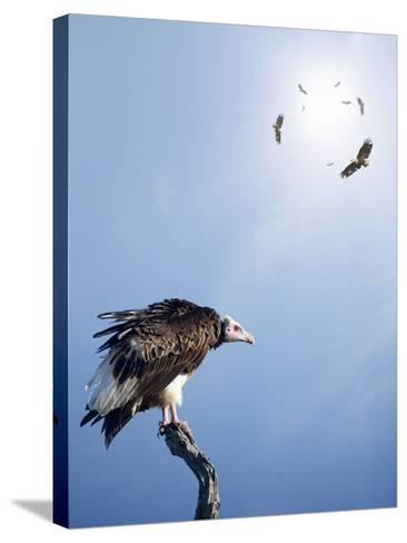Conceptual - Vultures Waiting to Prey on Innocent Victims (Digital Composite)-Johan Swanepoel-Stretched Canvas Print