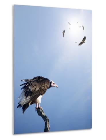 Conceptual - Vultures Waiting to Prey on Innocent Victims (Digital Composite)-Johan Swanepoel-Metal Print