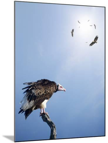 Conceptual - Vultures Waiting to Prey on Innocent Victims (Digital Composite)-Johan Swanepoel-Mounted Photographic Print