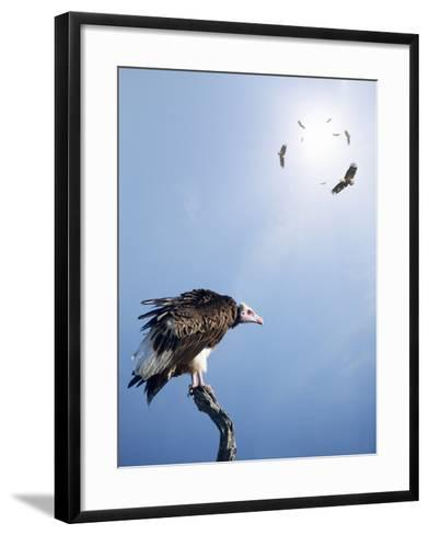 Conceptual - Vultures Waiting to Prey on Innocent Victims (Digital Composite)-Johan Swanepoel-Framed Art Print
