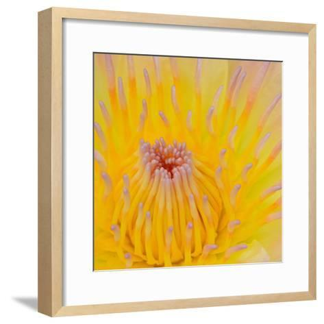 Close up of Beautiful Yellow Water Lily-Panu Ruangjan-Framed Art Print
