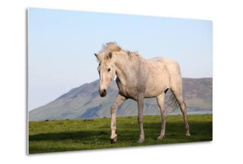 White Horse Portrait-Targn Pleiades-Metal Print